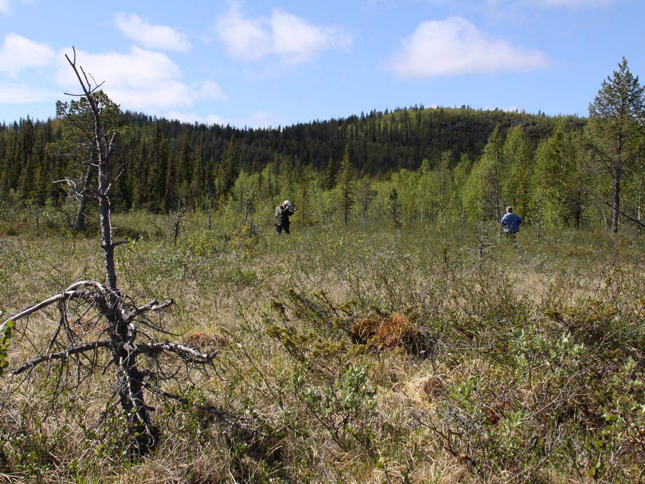 Kurravaara, Jukkasjärvi, T lm
