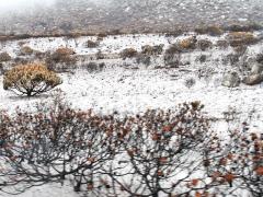 Askan täckte marken likt snödrivor.
