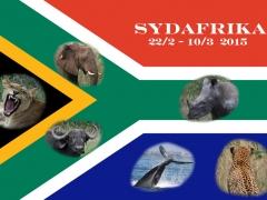 """Sydafrikas flagga med """"The Big Six"""". Förutom de fem stora viltdjuren leopard, lejon, elefant, noshörning, afrikansk buffel, inräknas ibland även val.  Samtliga av dessa imponerande djur hade jag turen  få med på bild och pryder nu flaggan. De oförglömliga resan ordnades av TEMARESOR och leddes av  vår entusiastiska och extremt kunniga reseledare Mona Haglund !"""