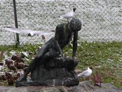 Skrattmås Croicocephalus ridibundus Black-headed Gull
