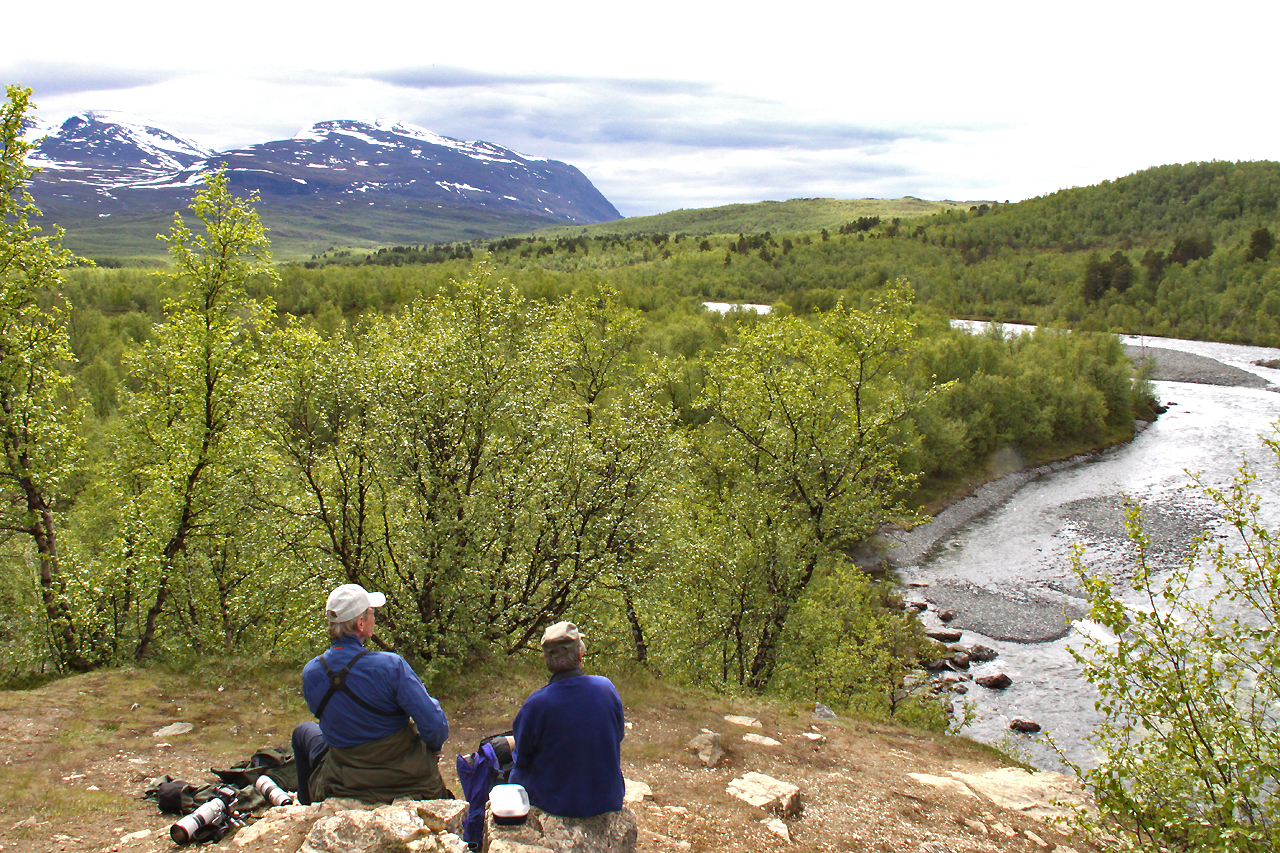 Tillbaka i Abisko där vi lyckades hitta en sjungande nordsångare. En art som ären mycket sällsynt sommargäst i Sverige och som övervintrar i s.ö. Asien.