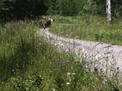 Fjärilsvägen i Grinduga, Gävle, Gästrikland.
