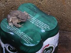 Ibland väntar överraskningar i brunnen. Här en padda som vaktar ölen.